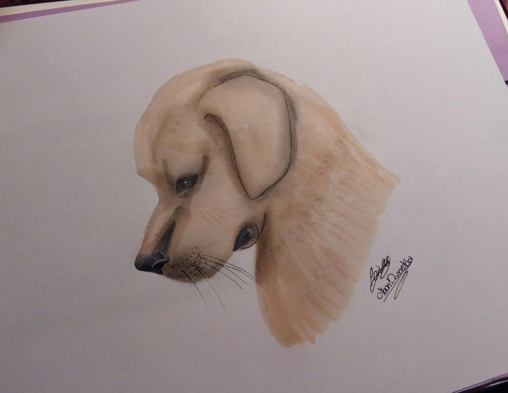 Dog drawing by moondaneka
