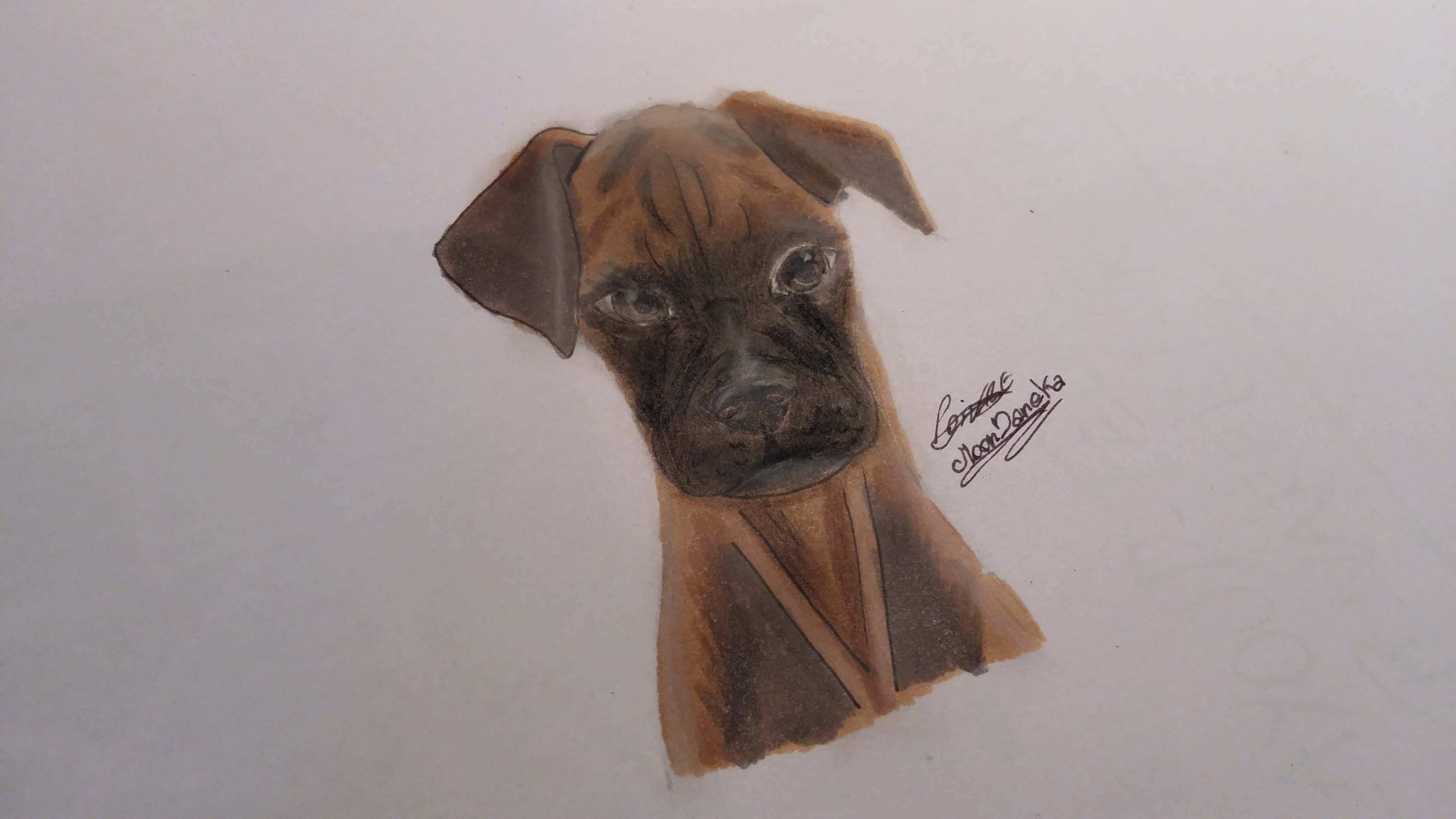 Dog Boxer by moondaneka