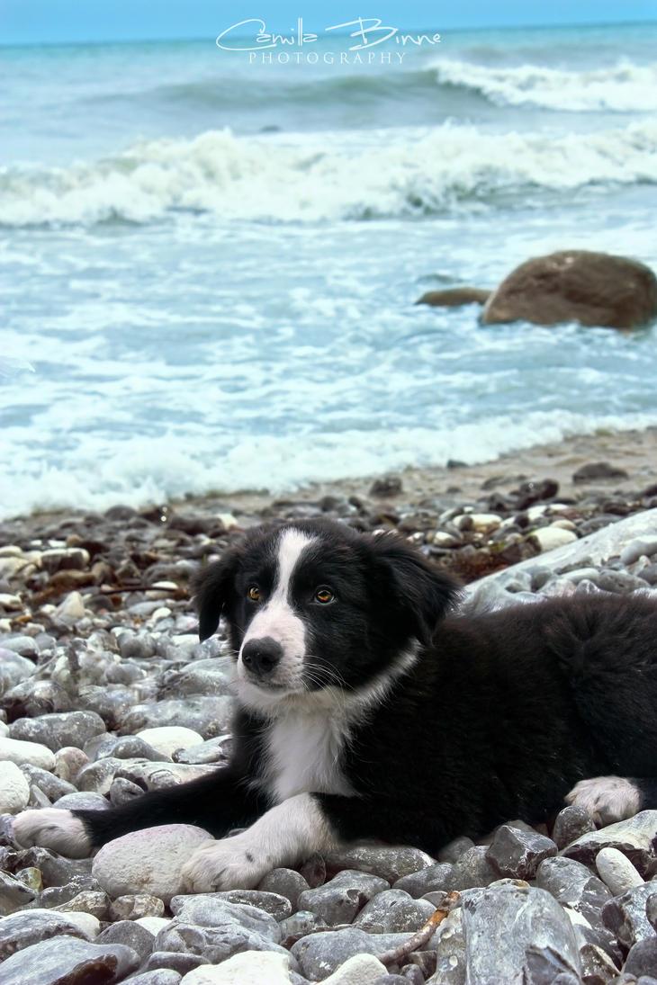 Jamie at the beach by Camillabinne