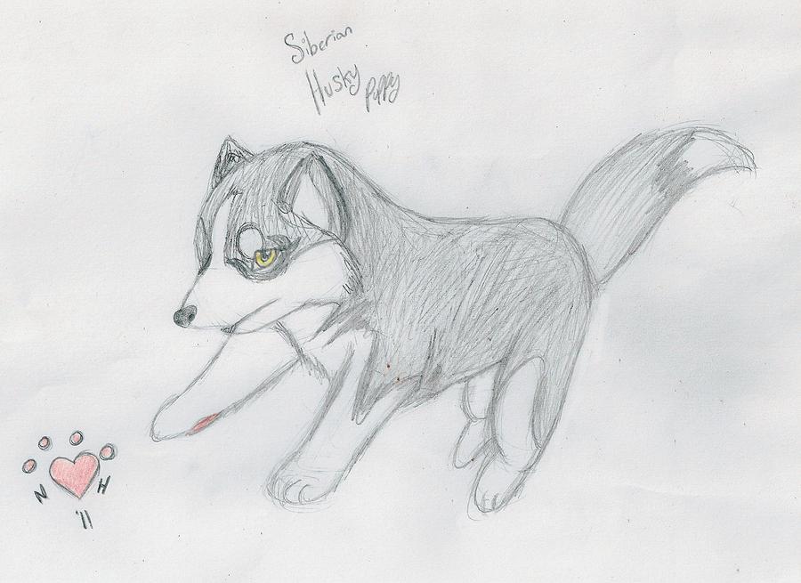 Realism husky puppy by NiehHuskey