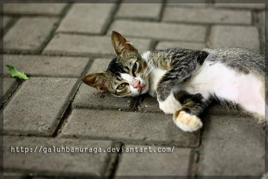 Kucing Santai By Galuhbanuraga On Deviantart