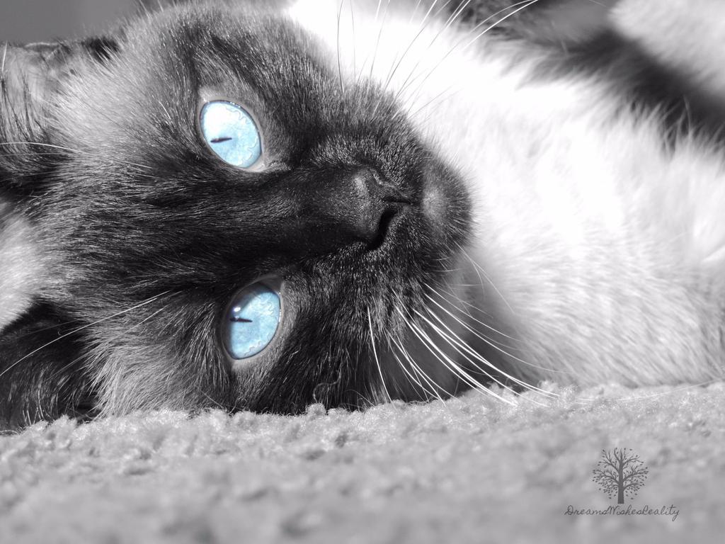 Startling Blue by DreamsWishesReality