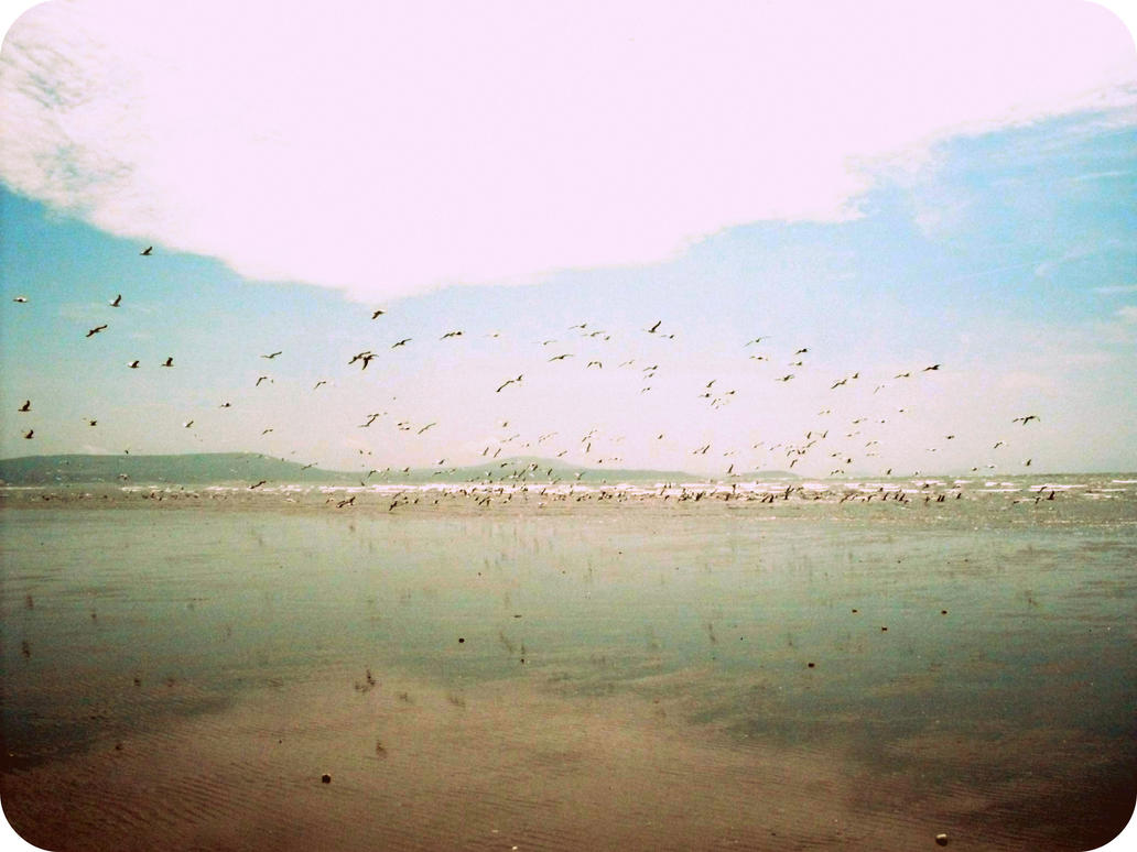 Sand,Sea and Birds by Ginkoftw