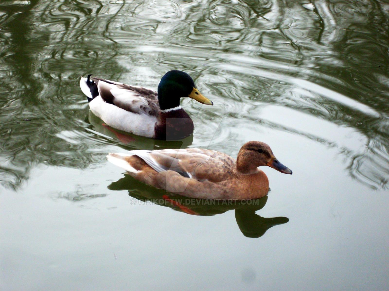 Love birds. by Ginkoftw