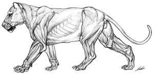 Lion anatomy by ononheli