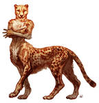 Cheetah taur