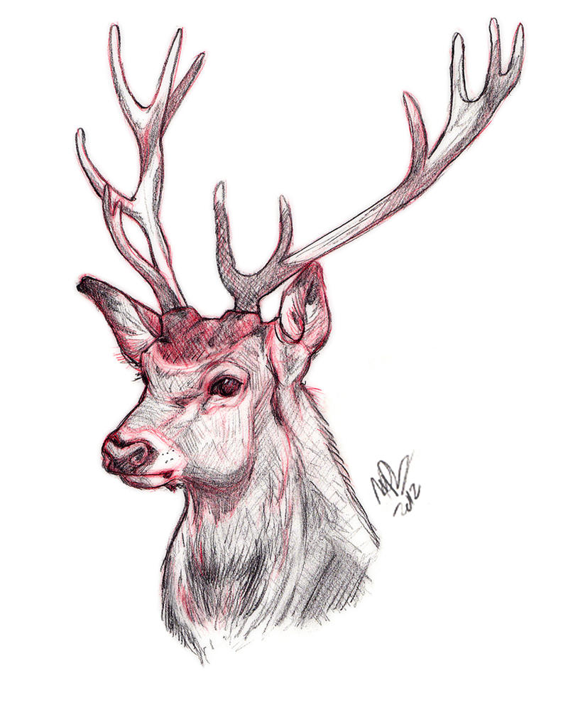 Deer Sketch by HeatherHitchman