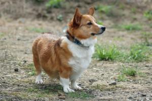 Kushimu's Profile Picture