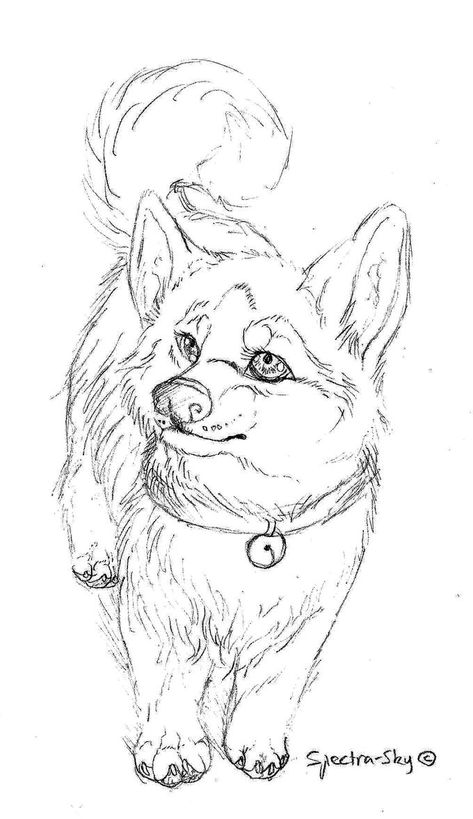 Husky puppy sketch by spectra sky on deviantart for Husky puppy coloring pages