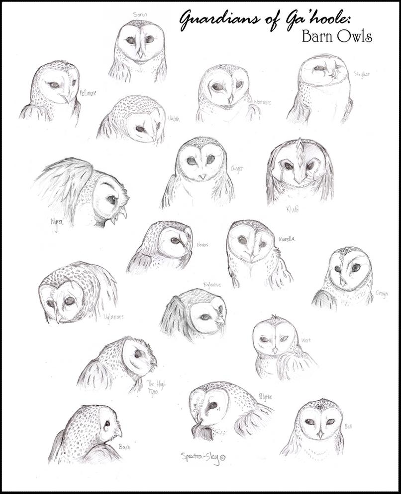 barn owls of ga u0027hoole full by spectra sky on deviantart