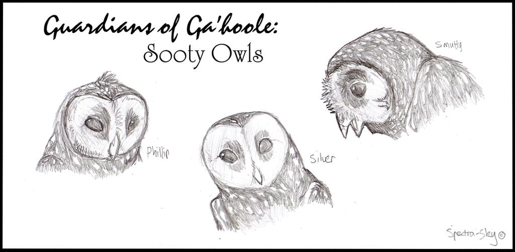 Sooty Owls of Ga'hoole by Spectra-Sky