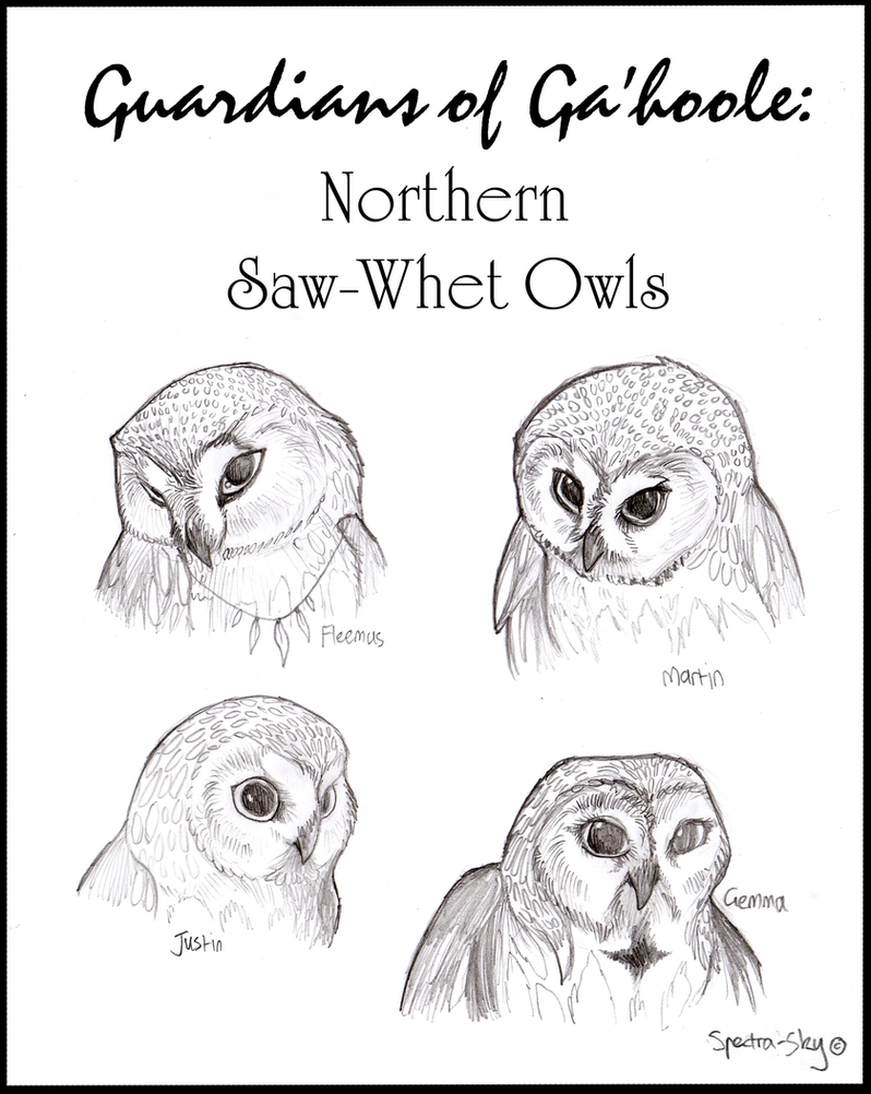 Northern Saw-Whet Owls of Ga'hoole by Spectra-Sky