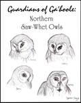 Northern Saw-Whet Owls of Ga'hoole