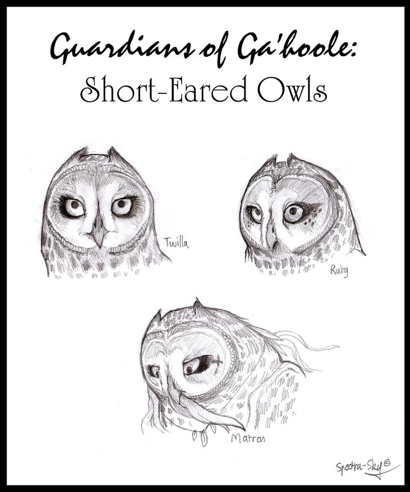 Short-Eared Owls of Ga'hoole by Spectra-Sky