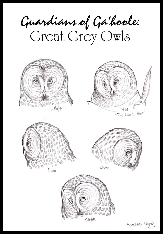 great grey owls of ga u0027hoole by spectra sky on deviantart