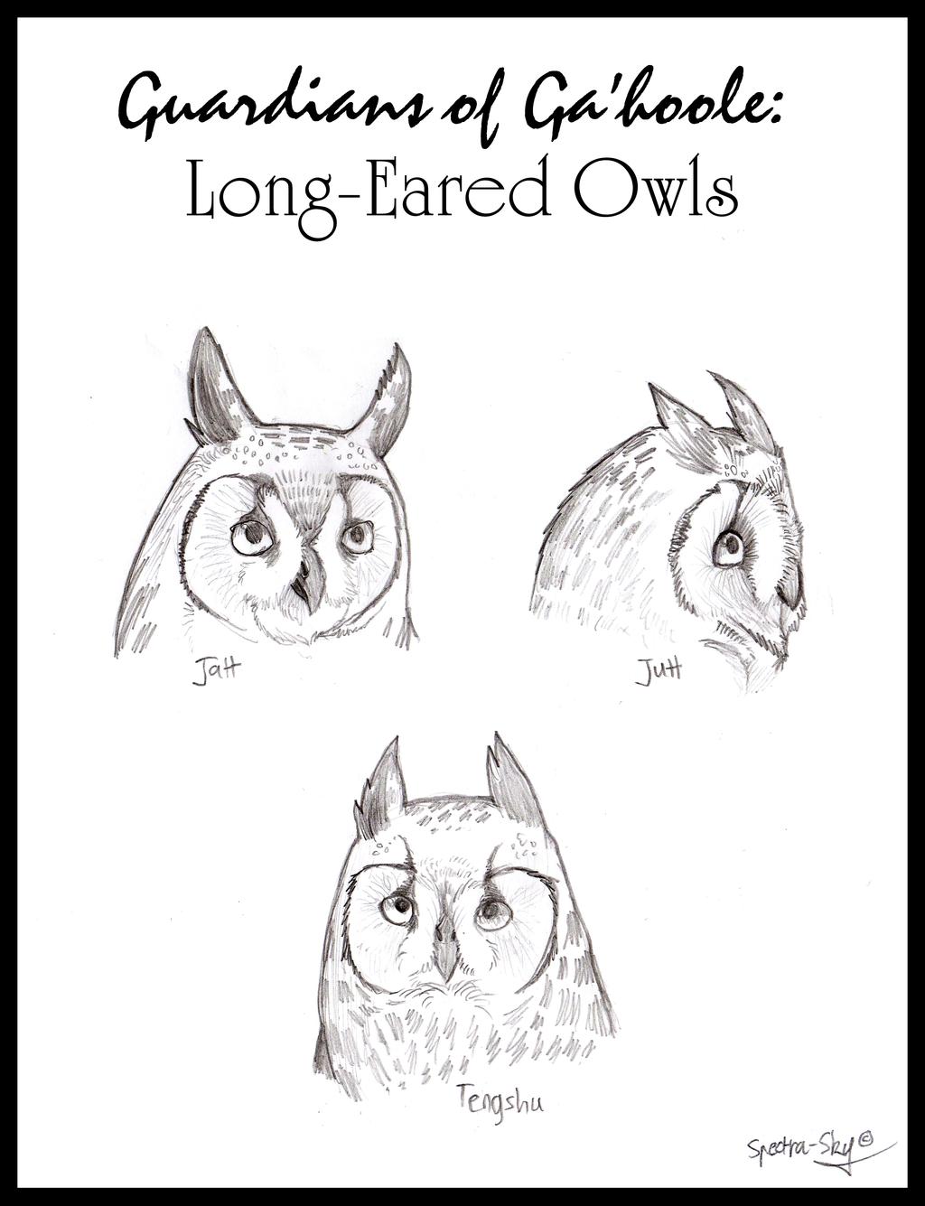 Long-Eared Owls of Ga'hoole by Spectra-Sky
