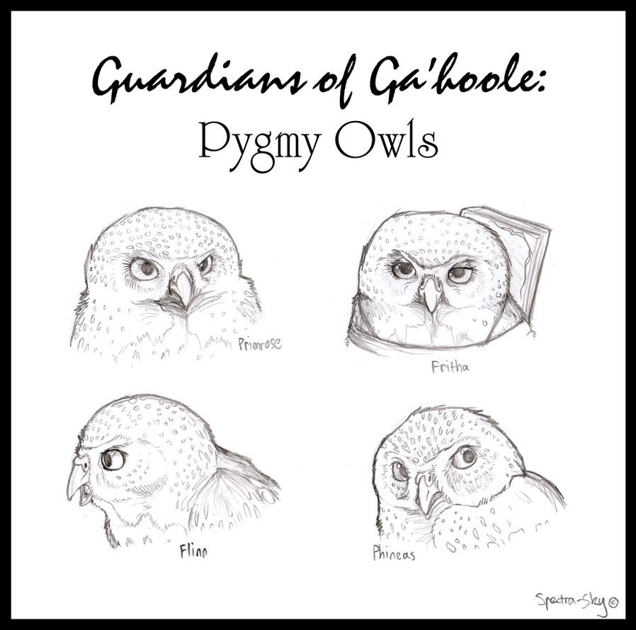 Pygmy Owls of Ga'hoole by Spectra-Sky