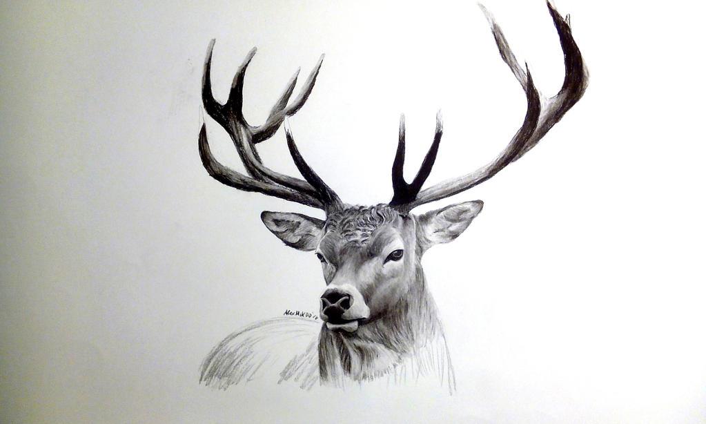 deer drawings - photo #18