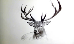charcoal drawing of a deer by AlexMiK