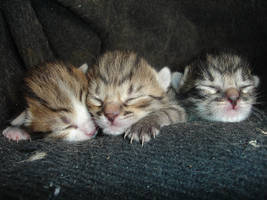 Sleeping kittens by teona89