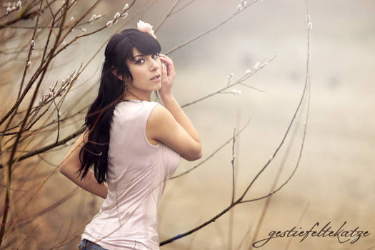 Soft Willow Katkins