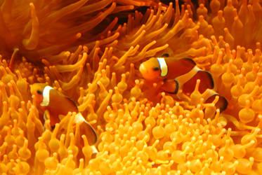 Nemos by TheRuberry