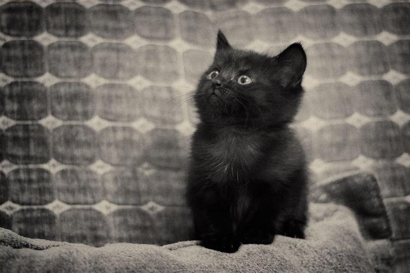Black kitten by Sebostian