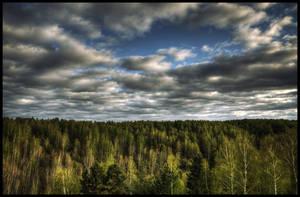 Forest by Sebostian