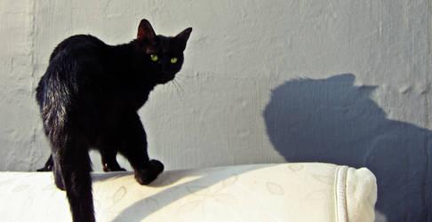 Miss. Shadow