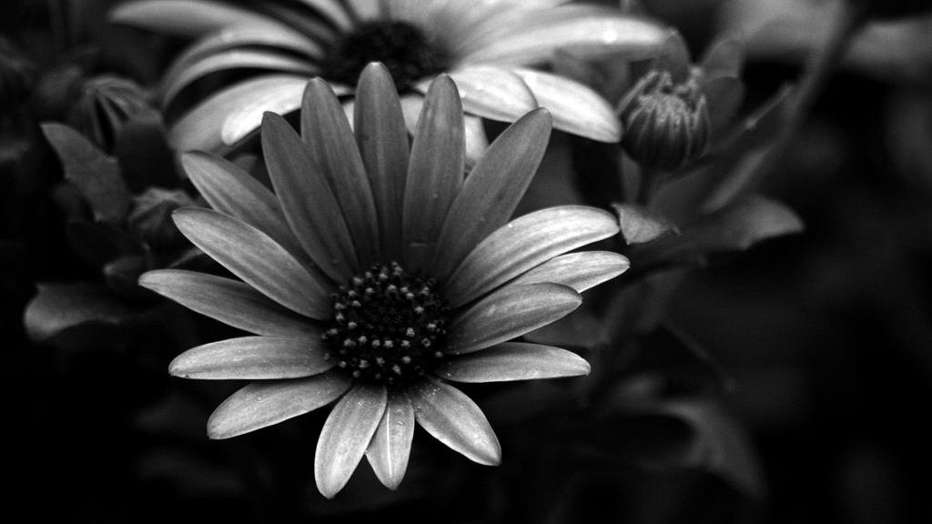 Colorful Things in Black and White by MikaelBremen on ...