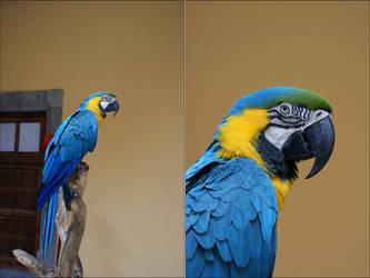 Parrot by skywalkerdesign