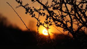 Sunset Wolfsburg