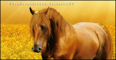PSauburnchick12's Profile Picture