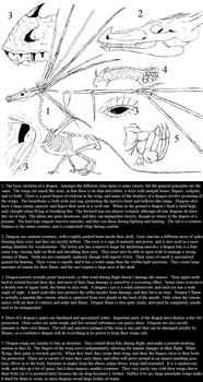 Dragony anatomy part 1