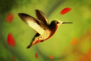Hummingbird by para-vine