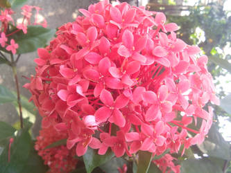 mini flowers with bunch..  by Paulami9564