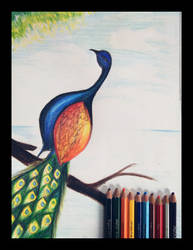 Peacock (independent). by Paulami9564