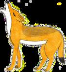 Canis aureus by RainforestWolf