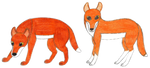 Canis (familiaris) dingo by RainforestWolf