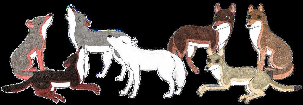 Canis Lupus By Rainforestwolf On Deviantart