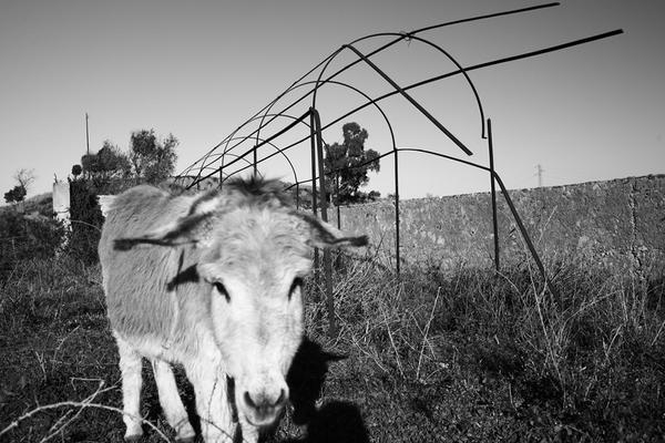 Donkey alone by Phorno
