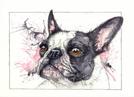 Frenchie by XanderMurphy