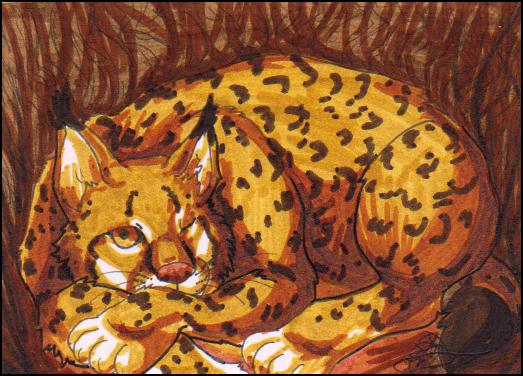ACEO - Lynx Lynx by Gomis