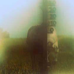 horse power by Rabotnik11811