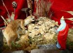 Weasel King by Rabotnik11811