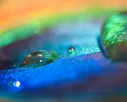 Ghetto Macro Feather by DARRYL-SMITH
