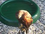 bird stock 3