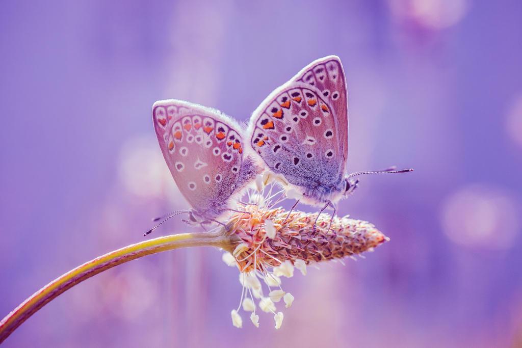 Maerchenhafte Schmetterlinge // Magic Butterflies by Detailmagie