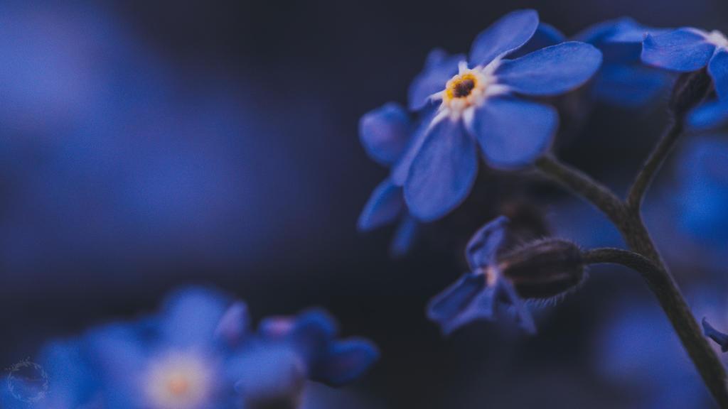 Blue World II by Detailmagie