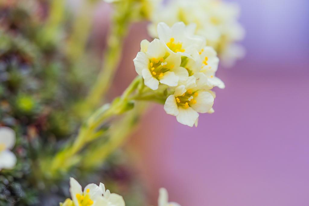 Spring is coming by Detailmagie